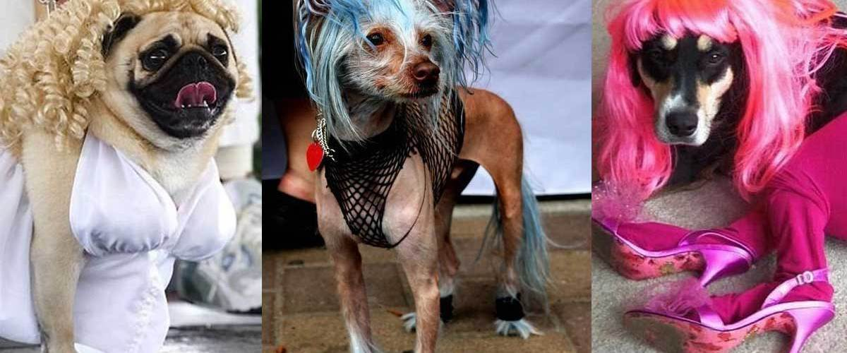 Zoophilie au Danemark : de plus en plus de chiens se prostituent sur les trottoirs de Copenhague