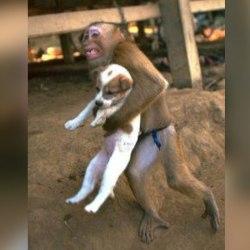 Attentat en Somalie : un singe qui sauve un petit chien devient un héros sur les réseaux sociaux