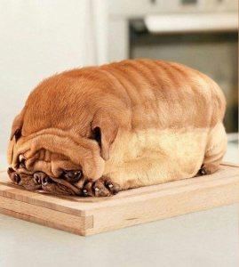 pain-chien-viande-chine-chinois-269x300 Le pain de chien : la nouvelle et cruelle tendance gastronomique en Chine