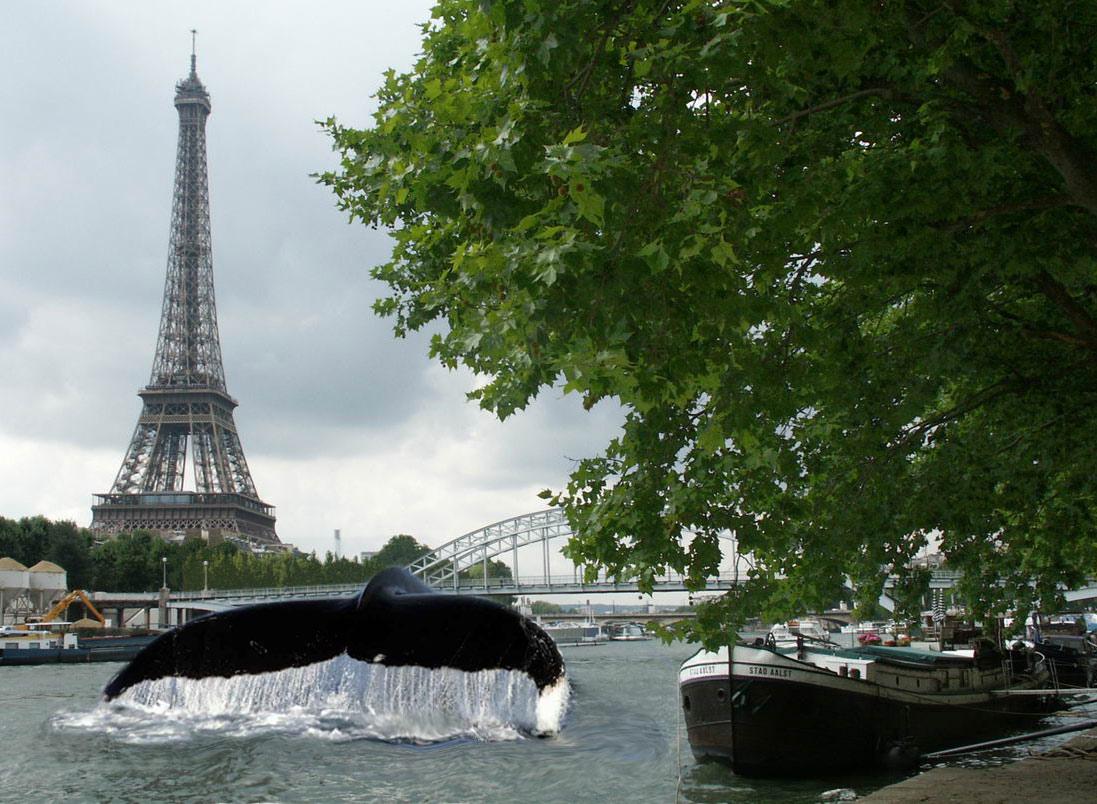 paris-baleine-seine-1 Paris : Des baleines dans la Seine après un siècle d'absence