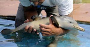 Il élève des dauphins dans sa piscine pour nourrir le crocodile qui vit dans sa baignoire