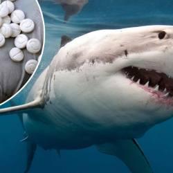 Dom-Tom : des requins agressifs à cause du Captagon, la drogue des djihadistes