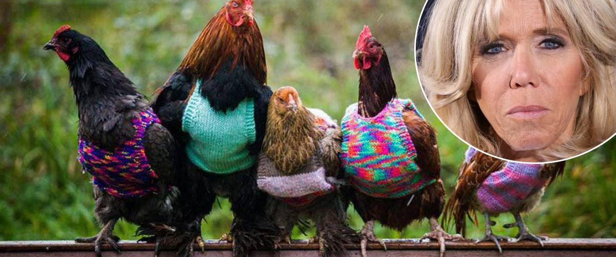"""A ce jour, l'opération """"Chaud Poulet"""" a déjà permis d'habiller plus de 250 poules dans toute la France. Un peu de chaleur et un peu d'espoir pour tous les poulets qui ont froid et qui n'ont pas la chance d'avoir été adoptés à l'Élysée ..."""