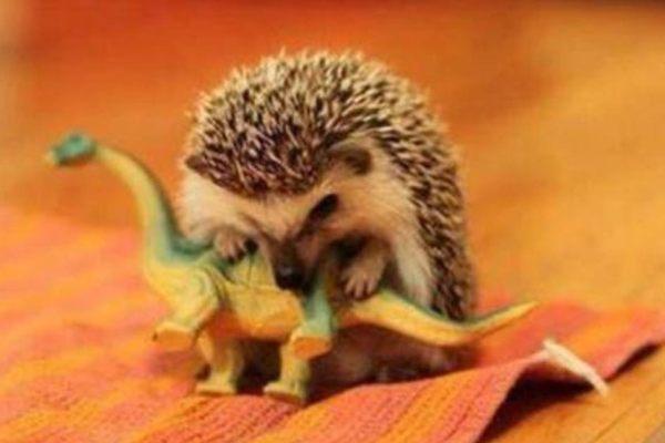 Évolution. Comment les hérissons ont éradiqué les dinosaures et profité de leur disparition