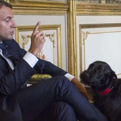 """""""Tu m'appelles """"Votre Majesté"""" et pas """"Wouf"""""""" - Emmanuel Macron recadre et humilie son chien Nemo"""