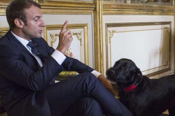 """Les Macron renomment leur chien """"BFM TV"""" – """"car il est docile et obéissant"""""""
