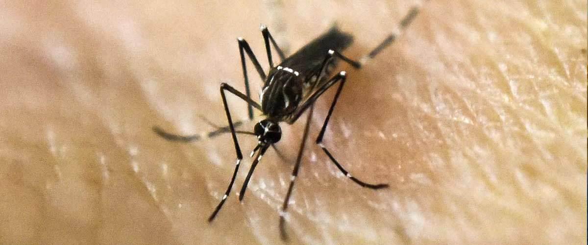 Un moustique devient raciste après avoir piqué un militant du Rassemblement National