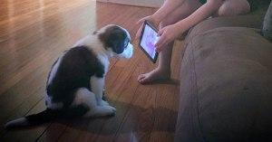 """De + en + de chiens et de chats accros aux écrans : comment aider ses animaux à """"déconnecter"""" ?"""