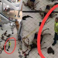 Les Gilets Jaunes tentent de saboter Noël : plusieurs rennes blessés, le Père Noël va bien