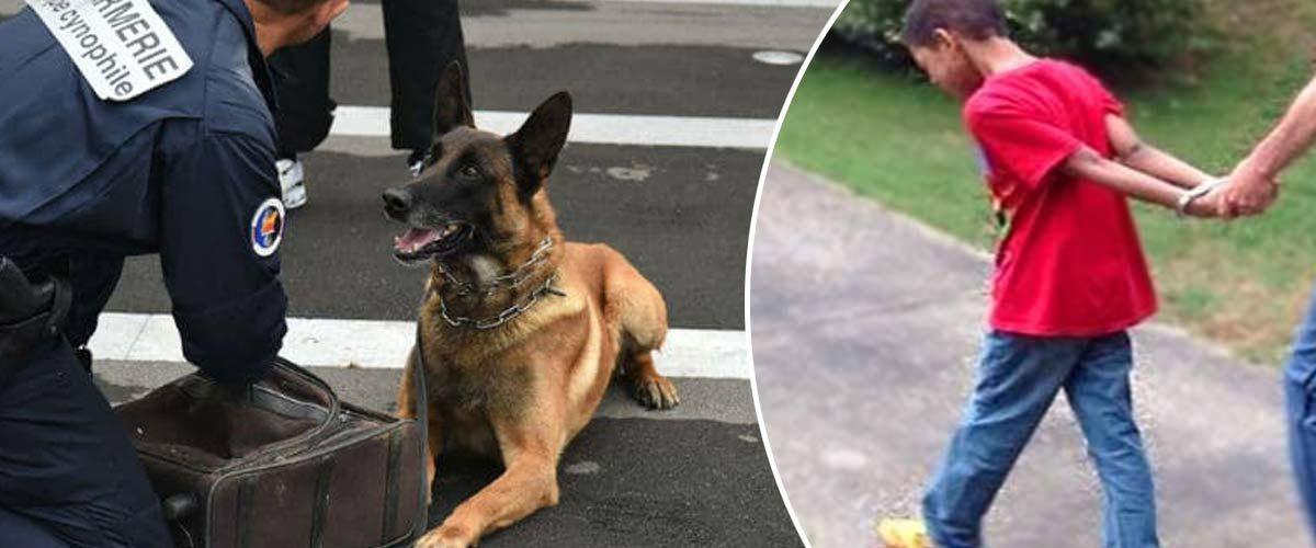 La gendarmerie circule avec des chiens renifleurs de portables dans les écoles
