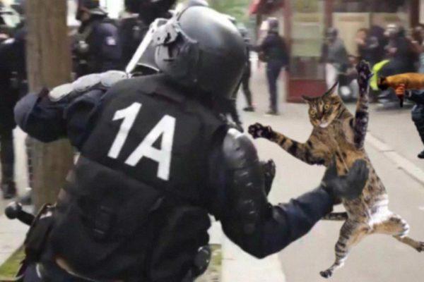 Des petits chats jetés par les CRS sur des manifestants