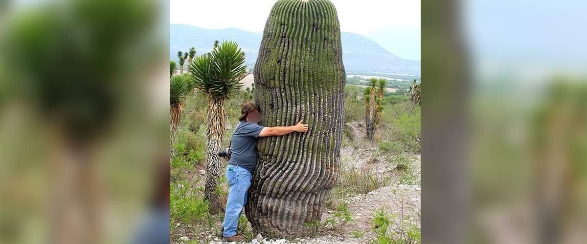 Un Néozélandais hospitalisé après avoir eu des rapports sexuels avec un ... cactus