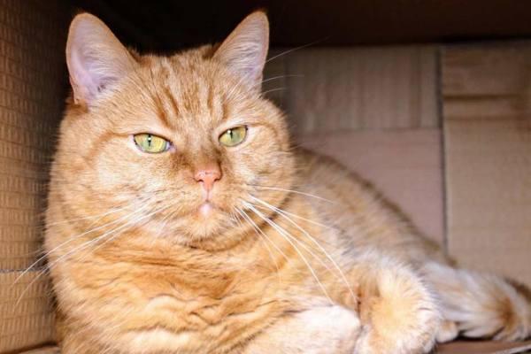 L'association de défense des animaux L214 demande la libération du chat de Schrödinger