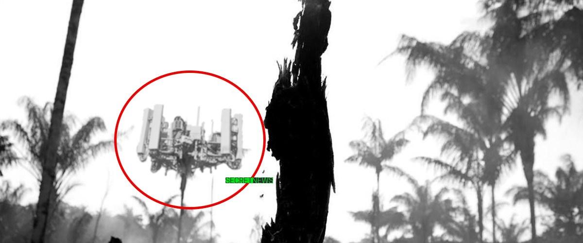 Des antennes 5G découvertes en Amazonie seraient responsables des incendies