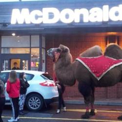 Grand Remplacement : McDonald's aménage ses drive-in pour les chameaux