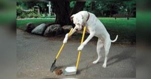 Confinement : Castaner demande aux chiens de sortir seuls et de nettoyer leurs déjections