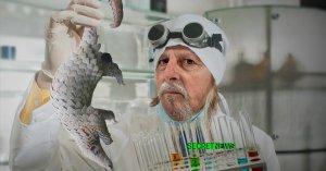 Tests sur des pangolins : L214 dévoile des images chocs du labo de Didier Raoult