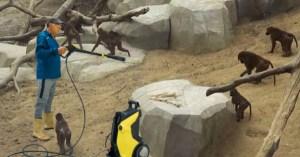 "Nicolas Sarkozy : ""il faut nettoyer les zoos au Kärsher"""