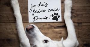 Couvre-feu : pour sortir son chien, celui-ci devra signer une déclaration sur l'honneur