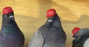 Banni de Twitter, Donald Trump enverra ses tweets par pigeons voyageurs