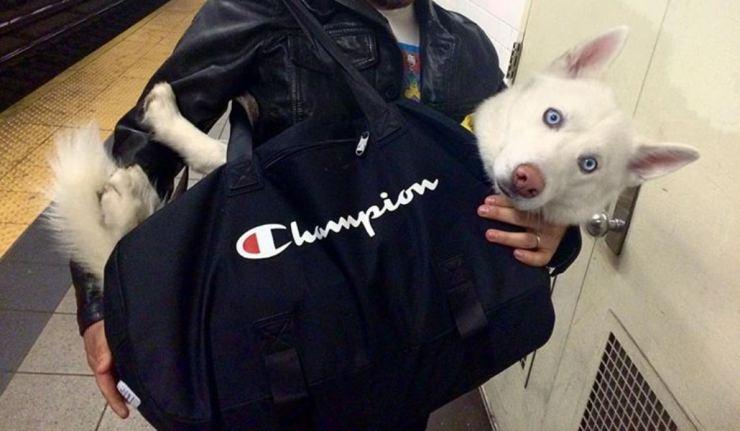 dog in bag 14