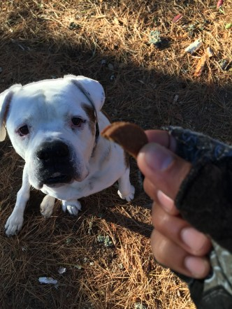 Taylor and his TREAT 11-19-15 8