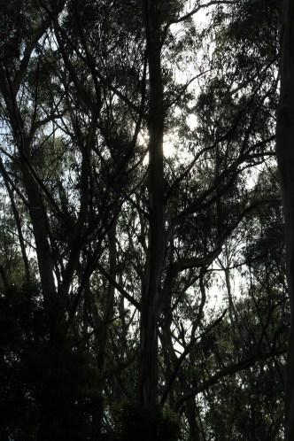 SCA Trail 11-20-15 0502