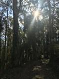 SCA Trail 7426
