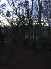 Fernwood at Night_9982