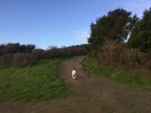 Hiking thru the Marin Headlands, including Fernwood Cemetery