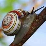 La vida de los caracoles
