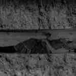 El lamento mapuche de Guadalupe Plata