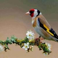 La plegaria del pájaro