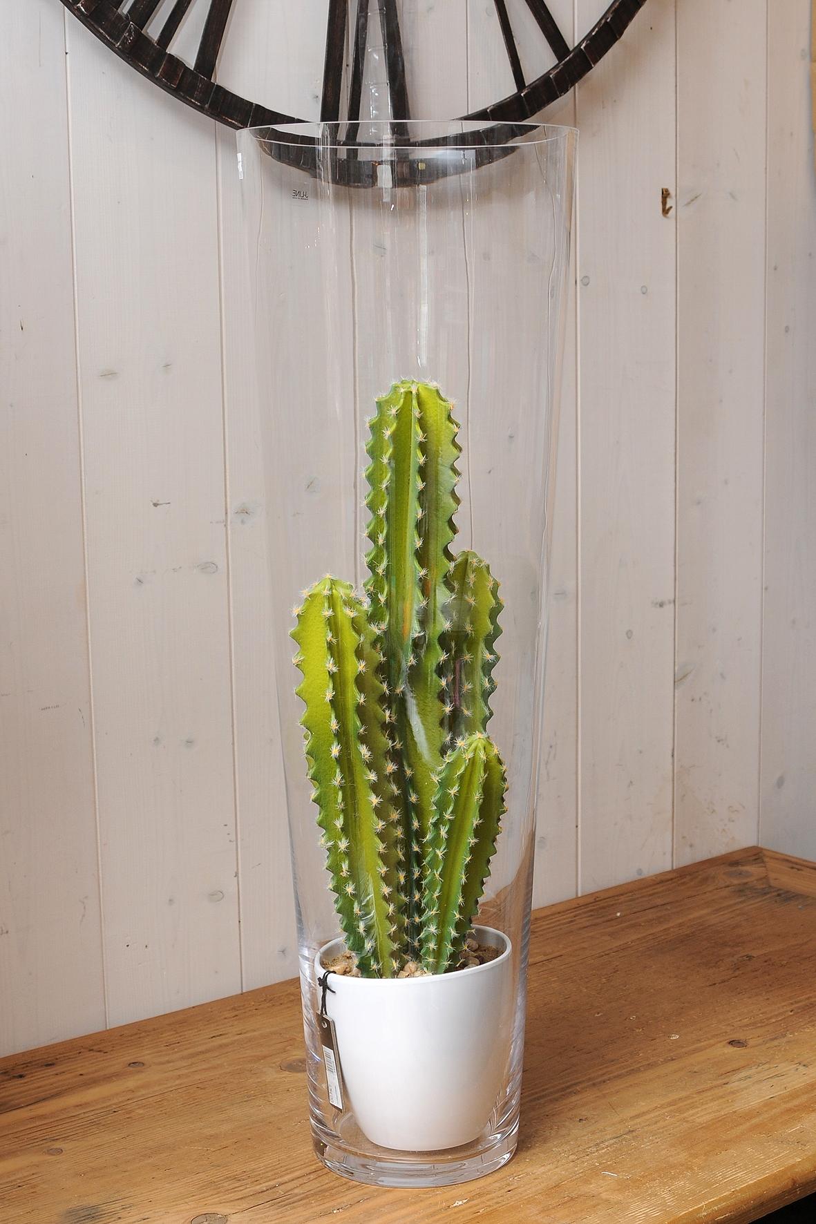 avec les cactus mettez du piquant dans votre d co. Black Bedroom Furniture Sets. Home Design Ideas