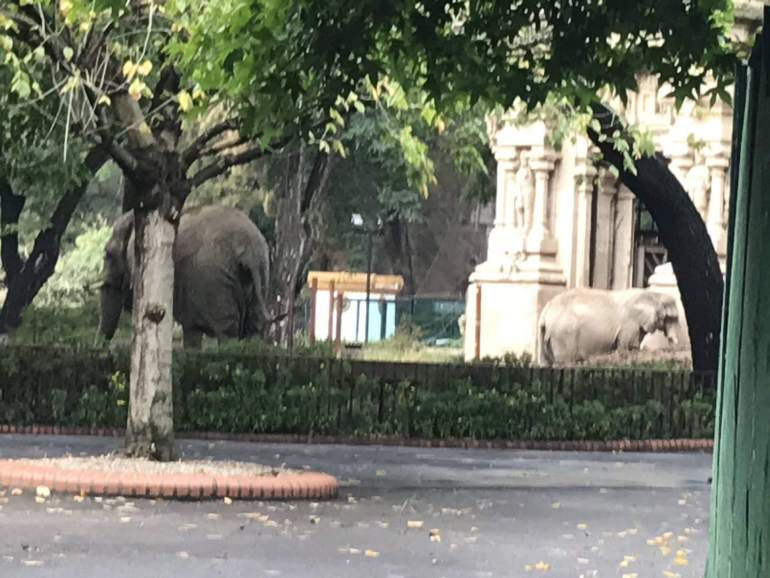 Elephants in Buenos Aires at their residence