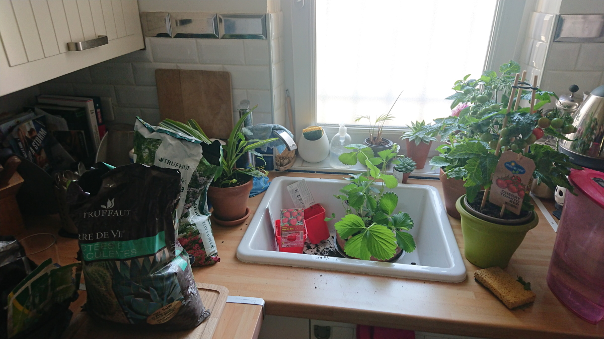 plants in kitchen sink