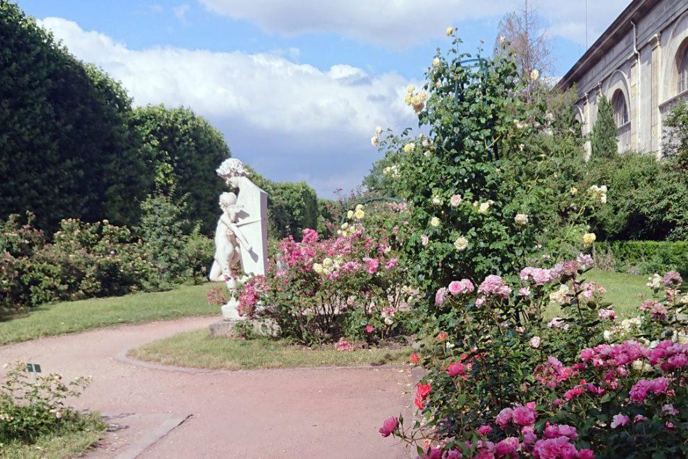 Rose Garden Jardin des Plantes