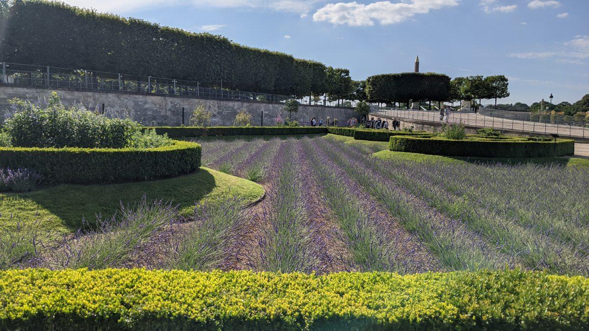 lavender ows