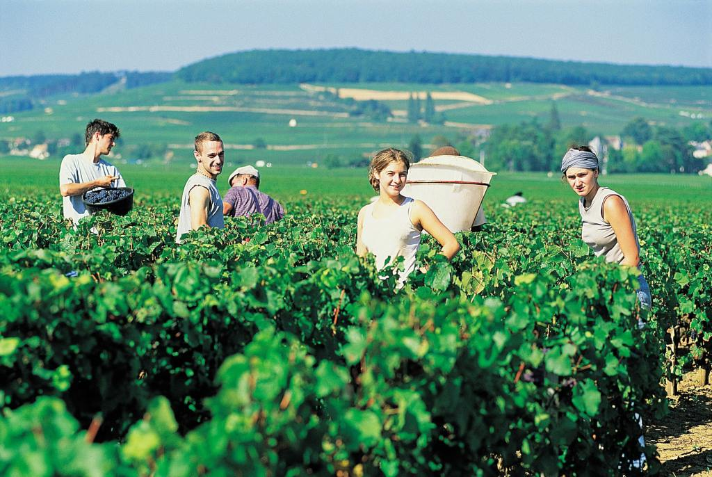 experience wine tour france burgundy