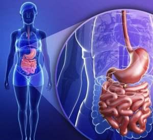 Как восстановить и оздоровить микрофлору кишечника