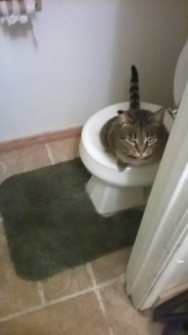 Cat Spraying: With proper training, who needs a litter box?
