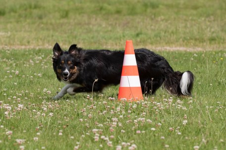 Home Training: Dogs Need Exercise and Mental Stimulation Too!