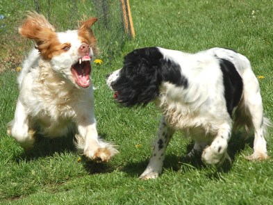 Why are dogs are aggressive towards other dog? Fear? Bad experience?