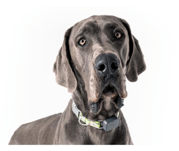 Smart Pet Gadgets: A GPS pet tracker