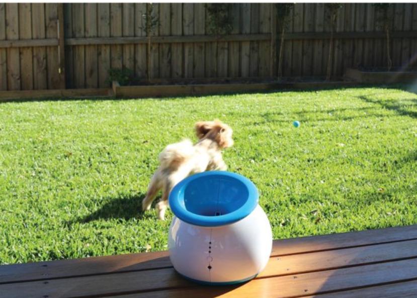 Smart Pet Gadgets: An interactive dog ball launcher
