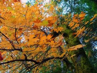 Autumn 2004 041