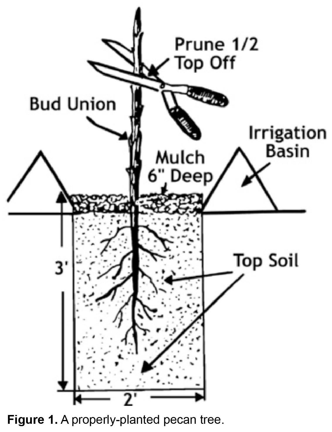 Pecan Grow Guide Go Nuts