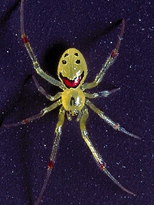 happy face spider  # 0