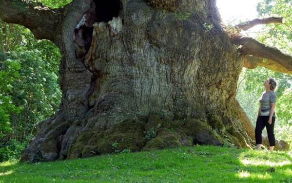 Britain's record-breaking trees identified - Telegraph