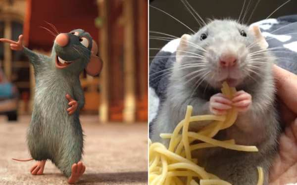 Video Video of rat eating spaghetti goes viral Telegraph